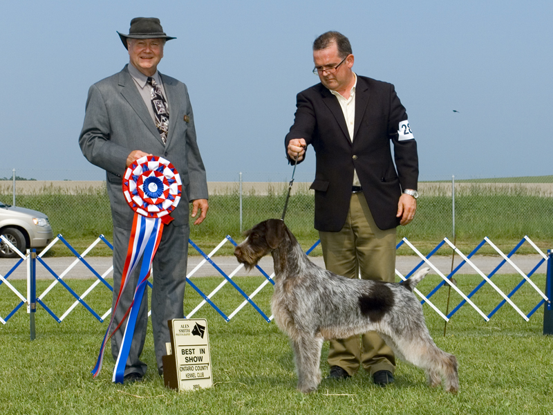BIS - Day 1, German Wirehaired Pointer
