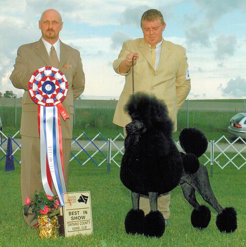 BIS - Day 2, Standard Poodle