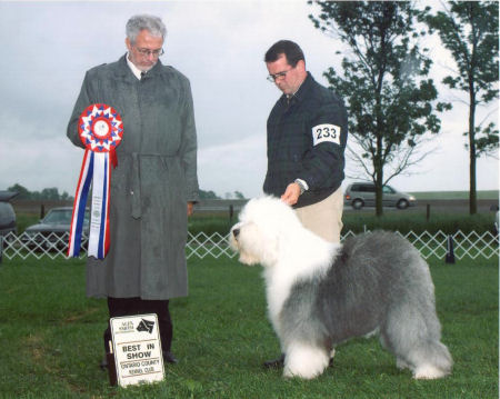 BIS - Day 3, Old English Sheepdog