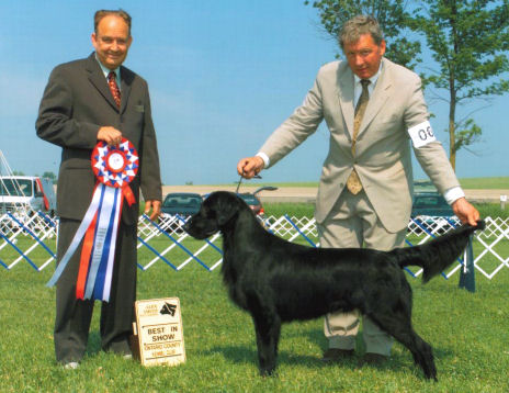 BIS - Day 2, Flat Coated Retriever