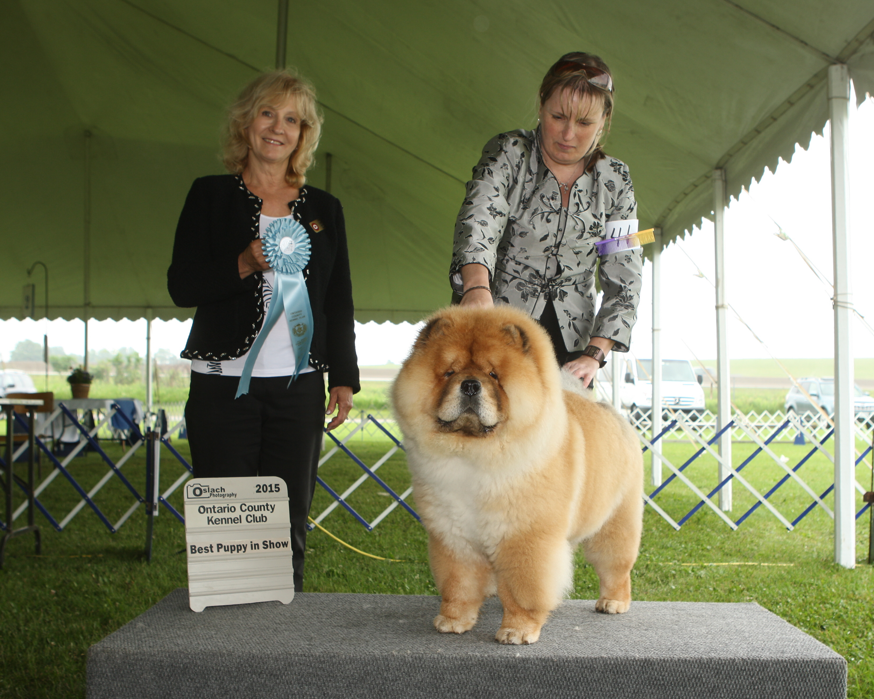 Best Puppy in Show Day 1 - Chow Chow