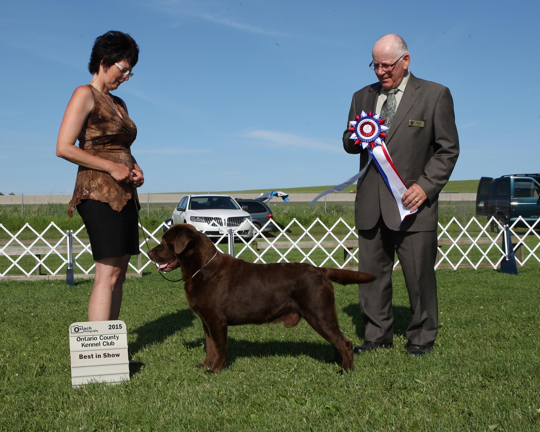 Best in Show Day 2 - Labrador Retriever