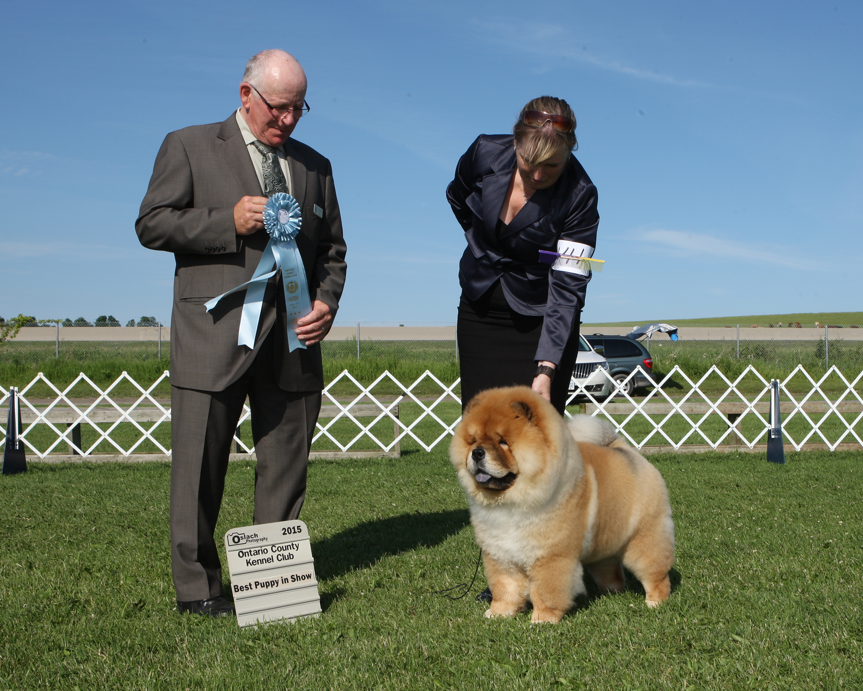 Best Puppy in Show Day 2 - Chow Chow