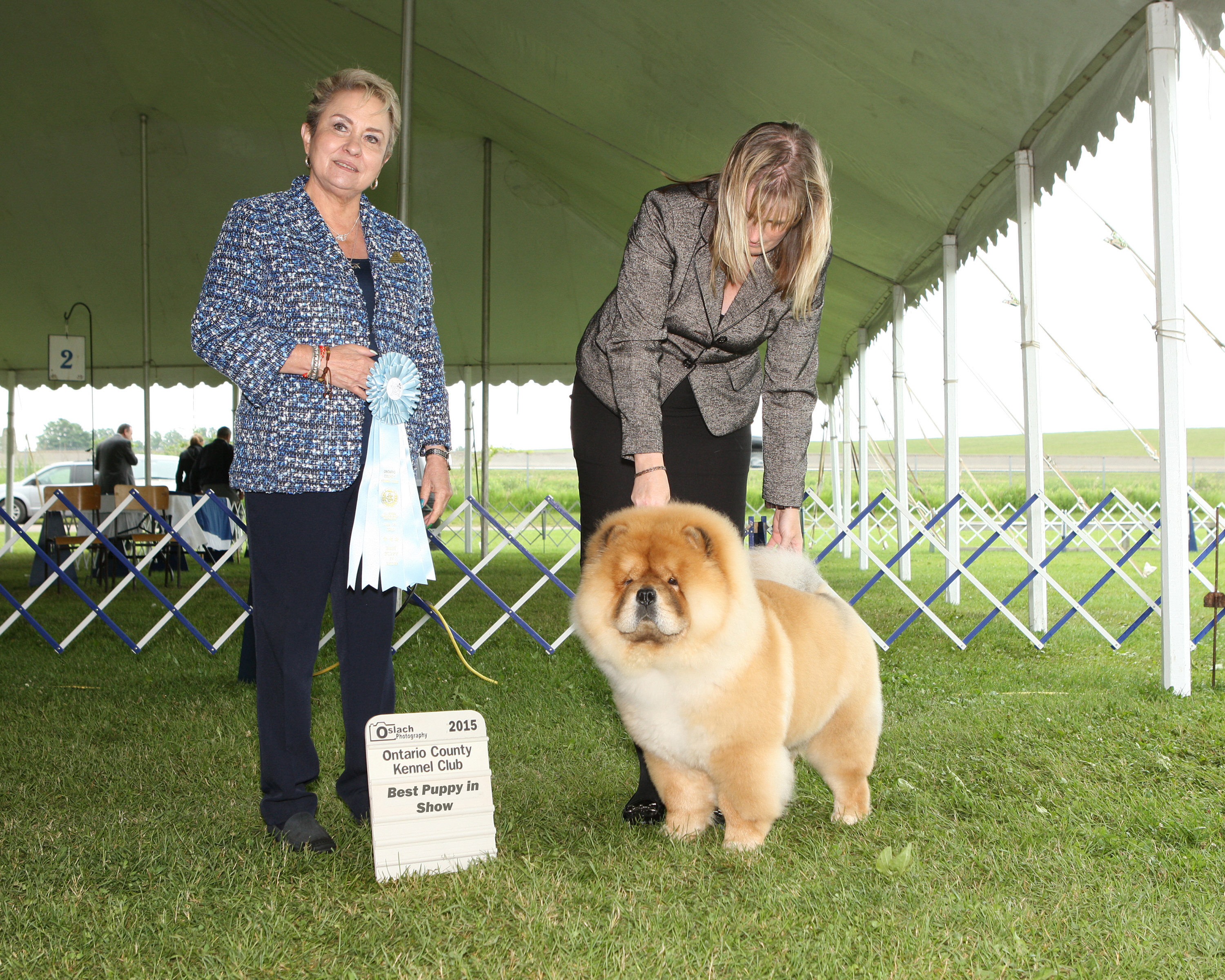 Best Puppy in Show Day 3 - Chow Chow